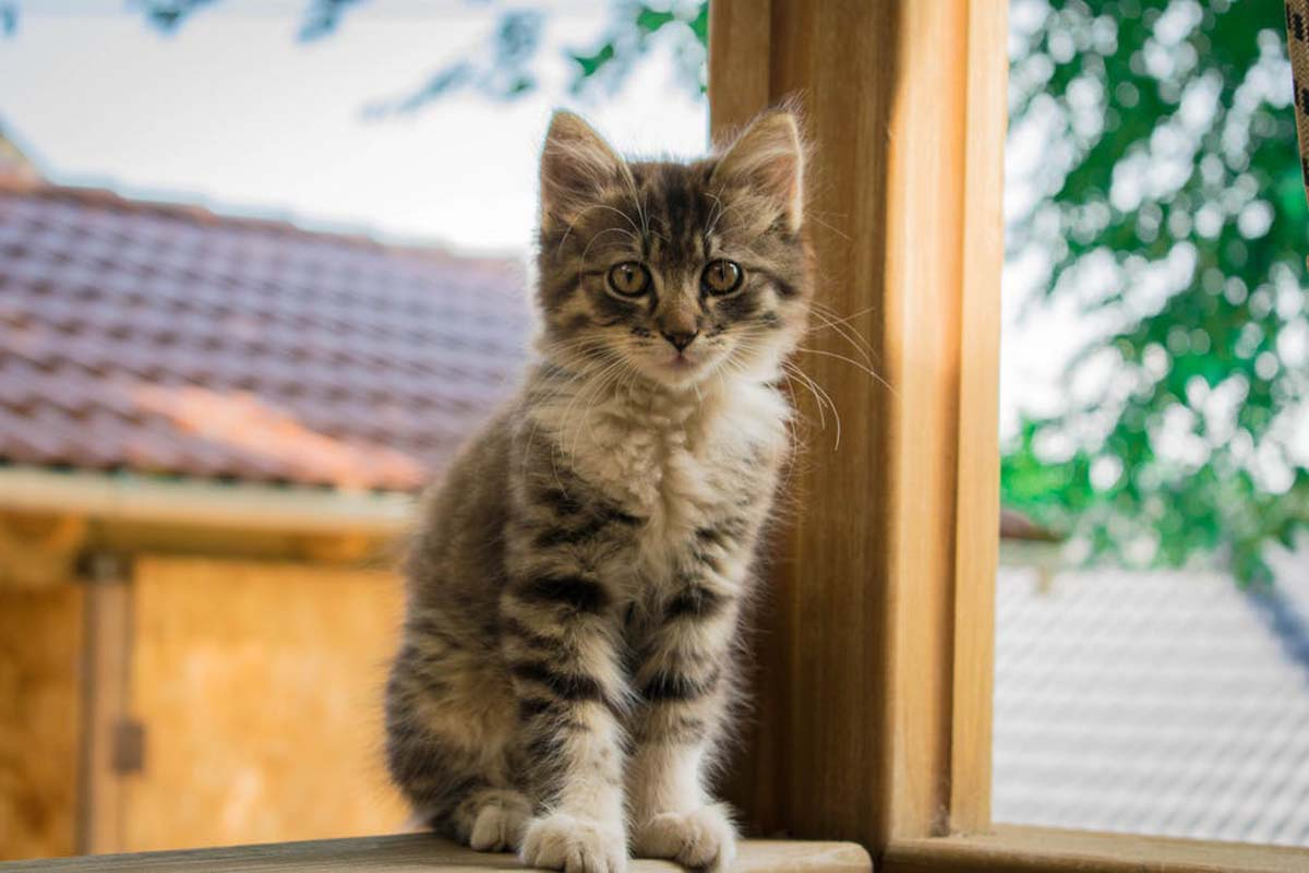Kitten sitting in the window