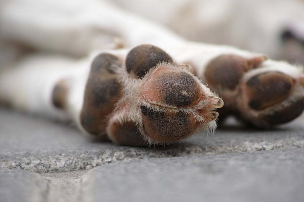 Dog paws and pads