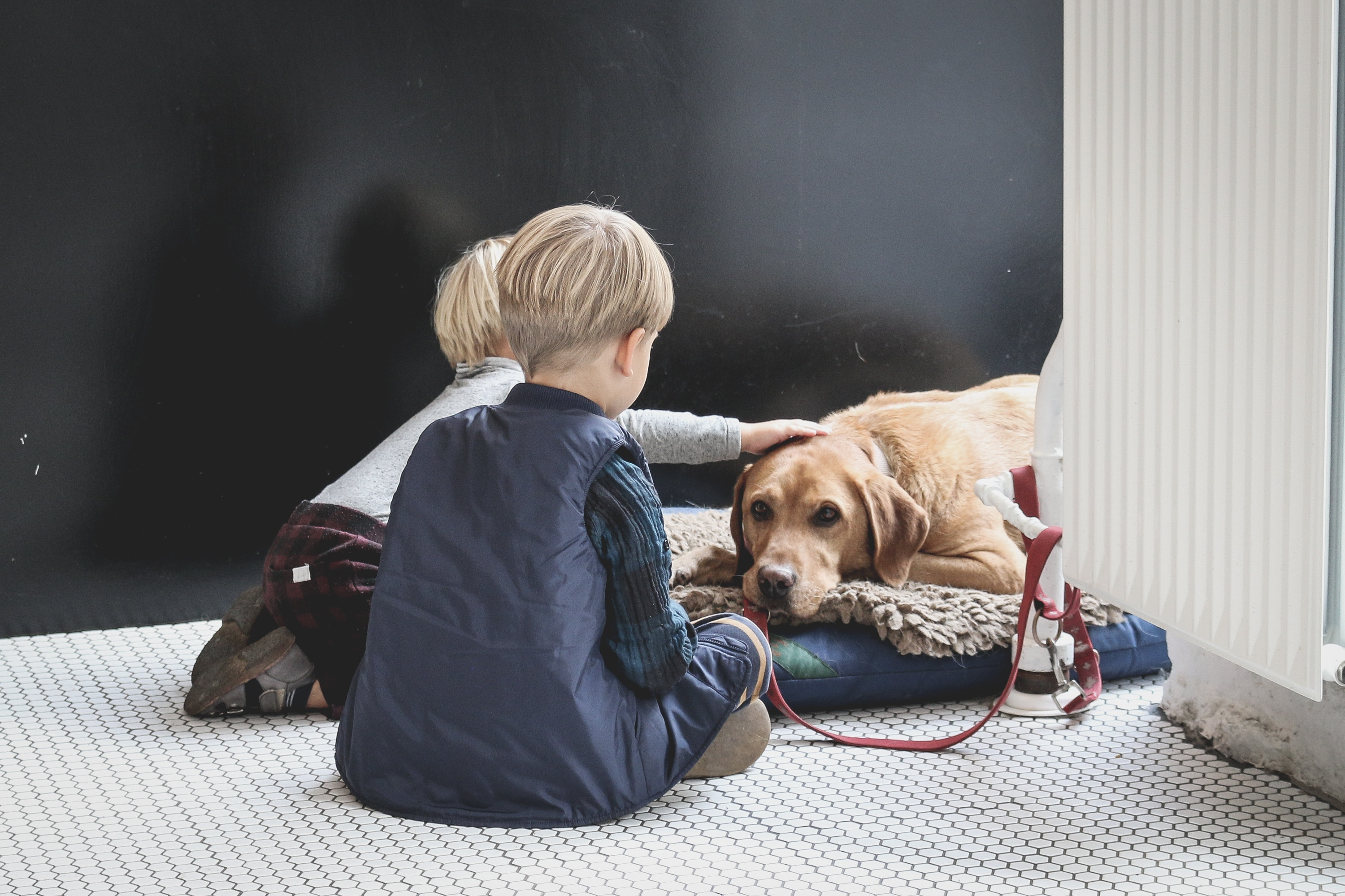 Two boys petting their dog in their home