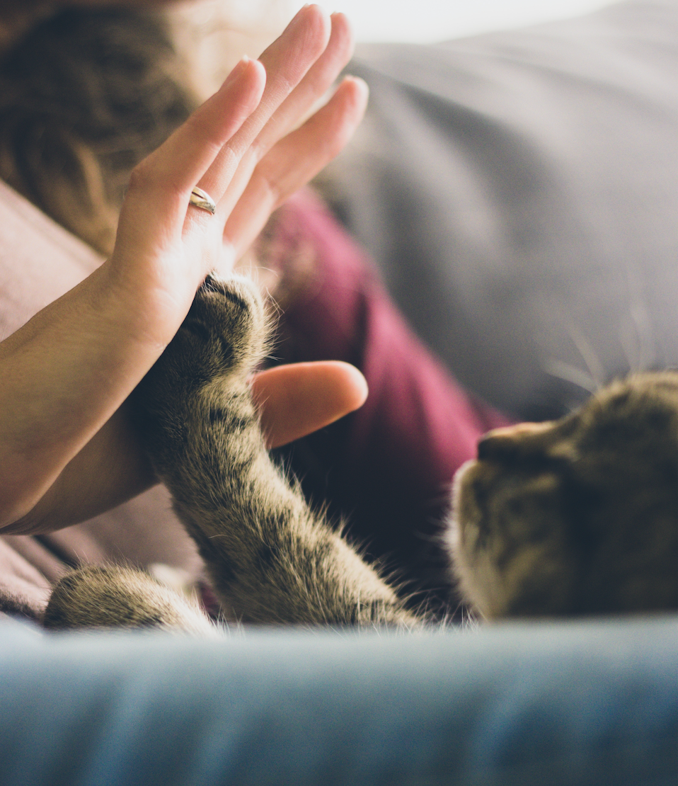 Kitten giving a woman a high-five