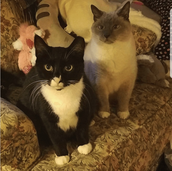 Two cats, Dr. Carrie's patients